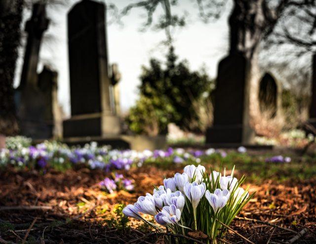 bloom-blossom-cemetery-161280.jpg